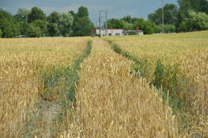 rolnik, rolnictwo, portal rolny, susza, KRIR, IUNG