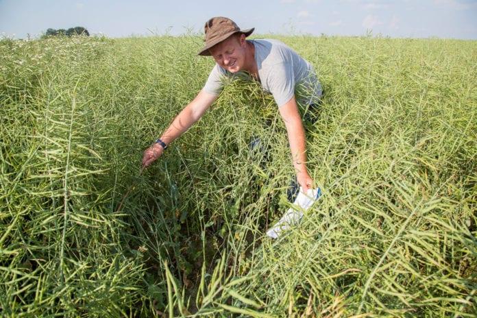 rolnik, rolnictwo, portal rolny, INNVOGO, Zorro 300 SL, Zorro i spółka, herbicydy w rzepaku, ochrona rzepaku, rzepak ozimy,