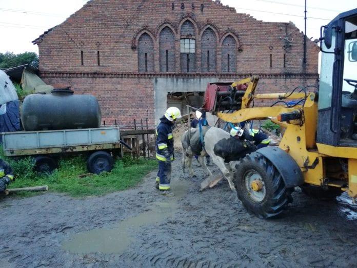 rolnik, rolnictwo, portal rolny, obora, strażacy, wypadki na wsi, akcje strażaków na wsi