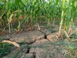 rolnik, rolnictwo, zysk rolnika, szacowanie szkód w rolnictwie, IUNG, susza, portal rolny, ASAP, Polskie Stowarzyszenie Rolnictwa Zrównoważonego,