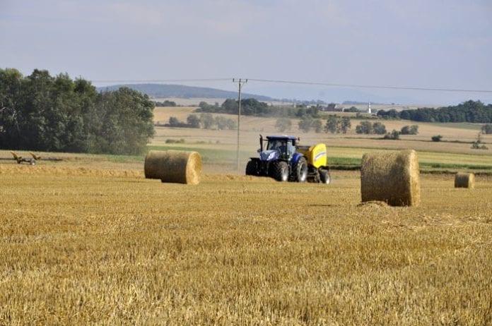 rolnik, rolnictwo, portal rolny, próchnica, gleba, resztki pożniwne, pszenica