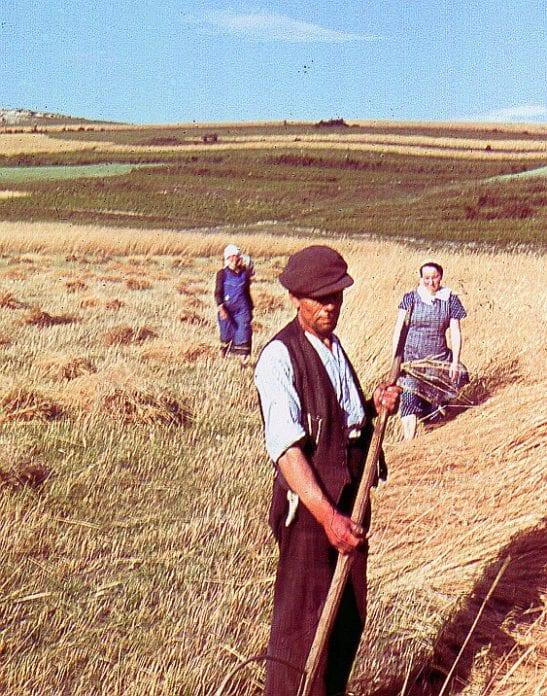 rolnik, rolnictwo, żywność, niepodległość, Polska, 100 lat Niepodległości
