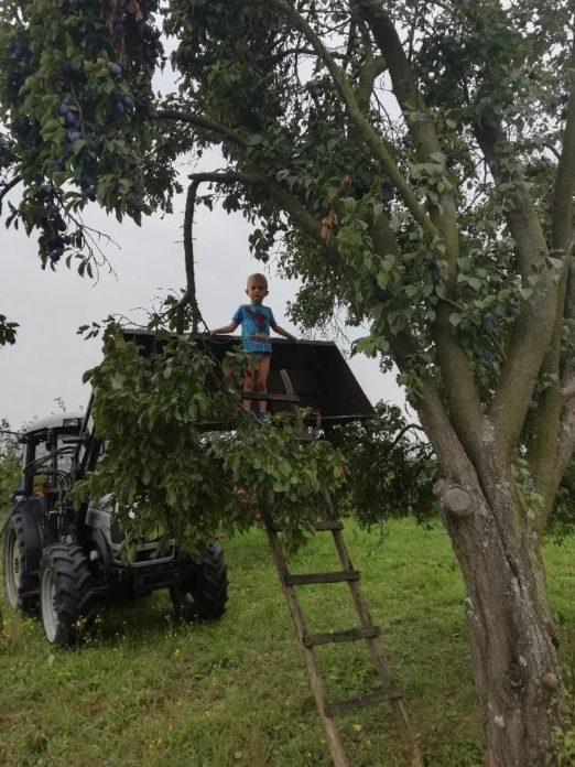 wypadki w rolnictwie, KRUS