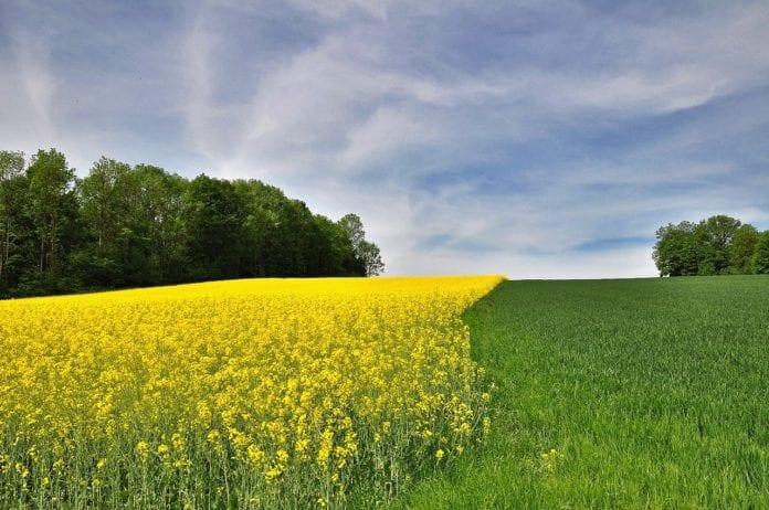 Dywersyfikacja, Dywersyfikacja upraw, ASAP, Polskie Stowarzyszenie Rolnictwa Zrównoważonego, rolnik, gospodarstwo, rolnictwo