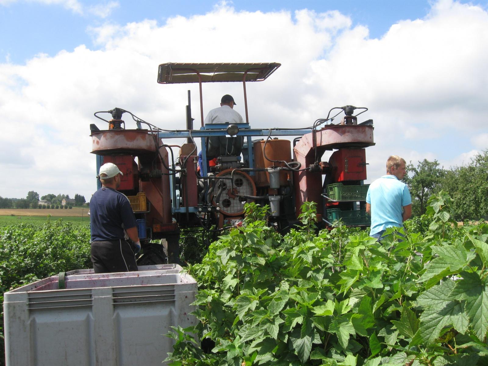 rolnik, rolnictwo, portal rolny, zbiory zbóż, truskawki, jabłka, porzeczki, maliny, wiśnie, czereśnie, śliwki, gruszki, Jakub Olipra, Credit Agricole, GUS