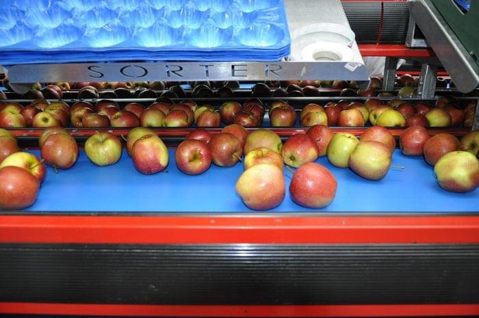 eksport jabłek, jabłka, ceny jabłek, eksport do Chin, PKO BP, AgroNawigator