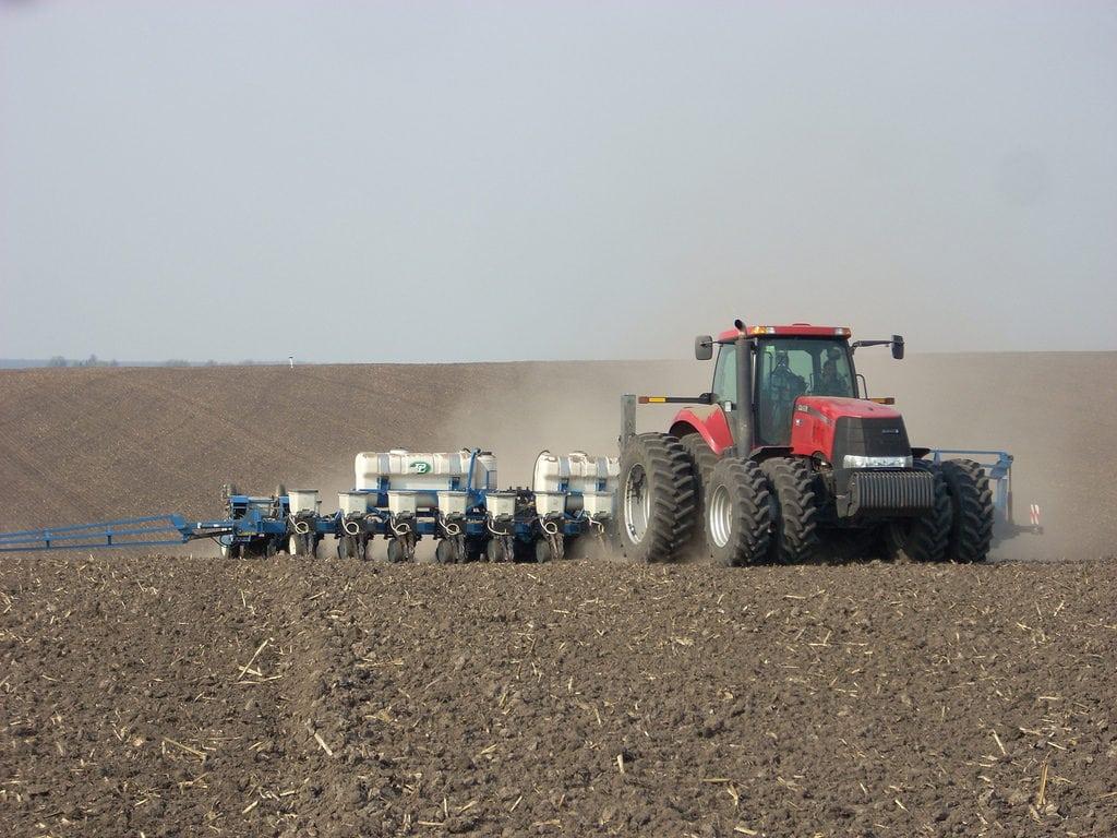 kukurydza, siew kukurydzy, odmiany kukurydzy