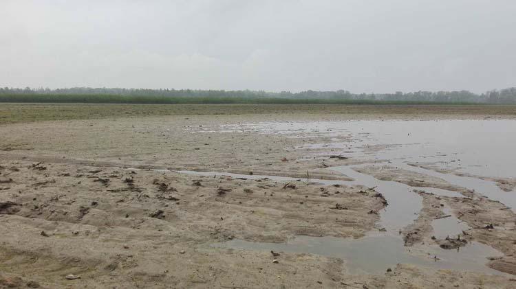 rolnik, rolnictwo, susza, deszcz, powódź, pole, zalane pole, zniszczone uprawy, szacowanie strat