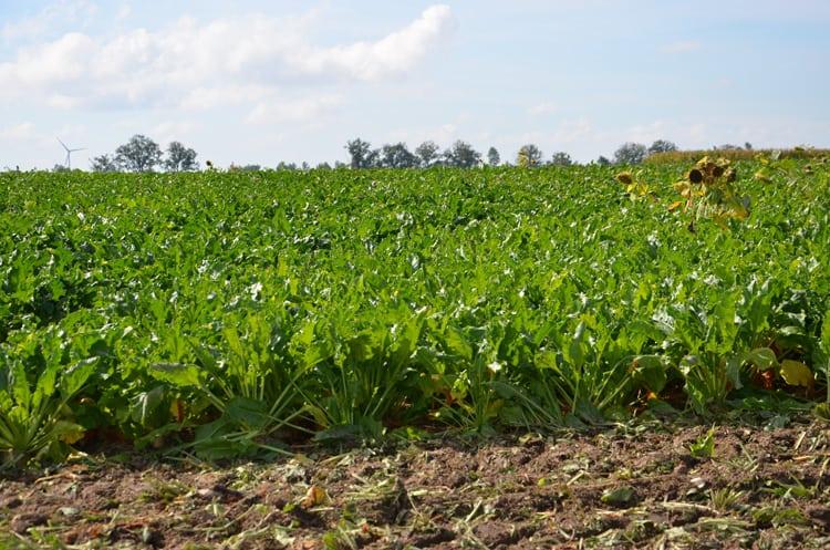 agrofagi, zastosowania małoobszarowe środków ochrony roślin, Zastosowania małoobszarowe,