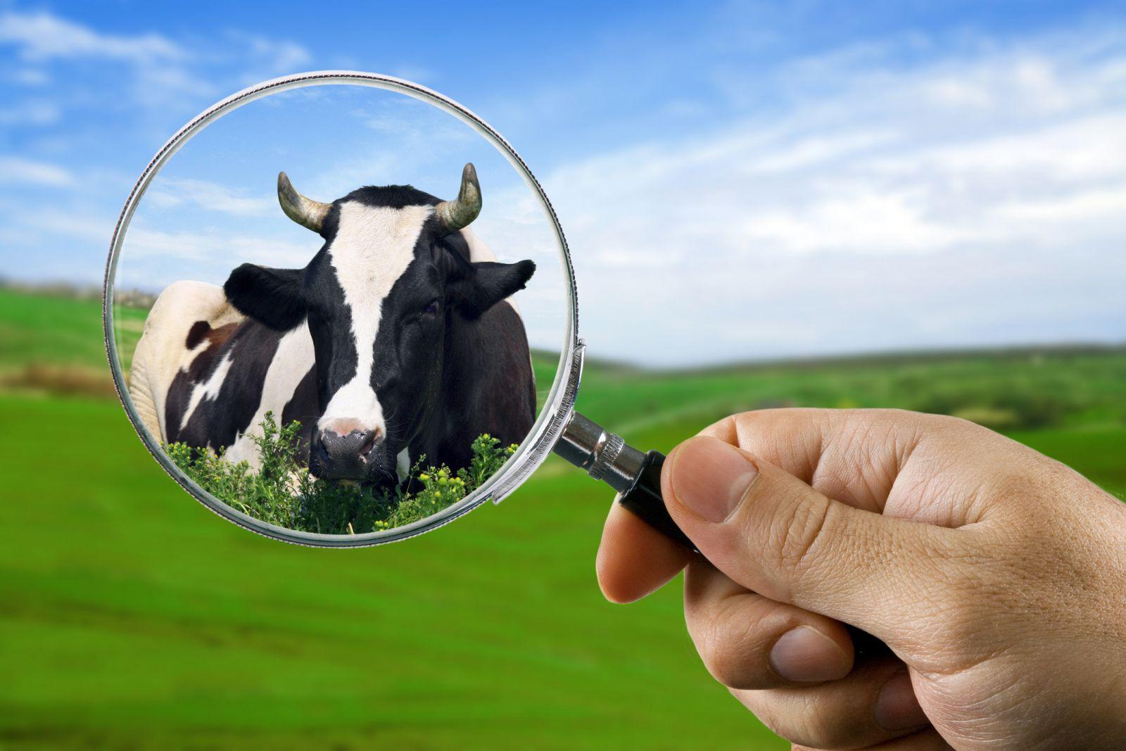 W drodze do Wspólnej Polityki Rolnej po 2020 roku, rolnik, rolnictwo, portal rolny, WPR, Euractive