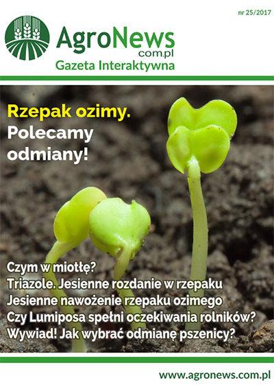 gazeta260
