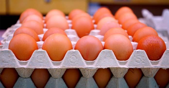 eksport jaj, jaja, Krajowa Izba Producentów Drobiu i Pasz, ceny jaj