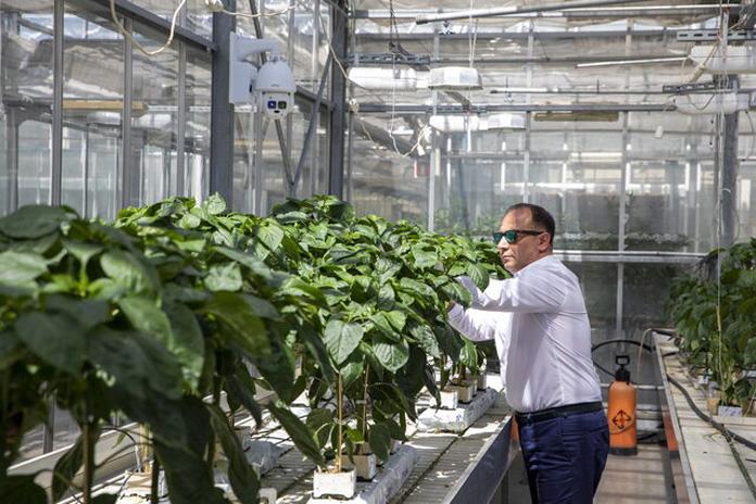 Roślinny Big Brother, prof. Hazem M. Kalaji, SGGW, rośliny, ochrona roślin
