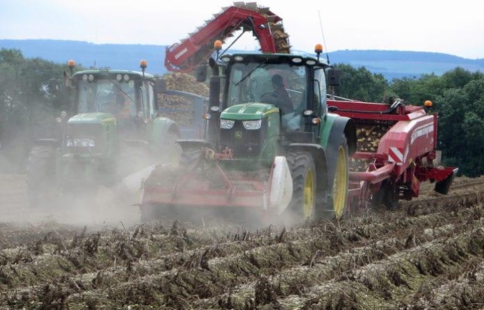 rolnik, rolnictwo, Producenci ziemniaków, IUNG, ziemniaki, buraki cukrowe, System Monitoringu Suszy, Chojnice, Krajowa Rada Izb Rolniczych,