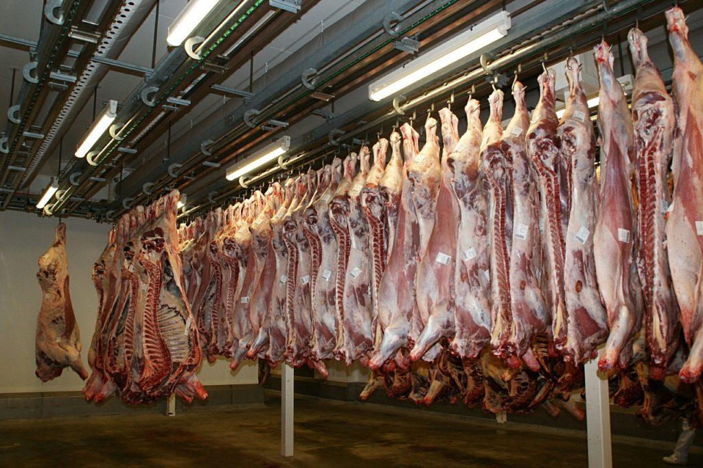nielegalny ubój, Sprzedaż chorych krów, mięso z chorych krów,