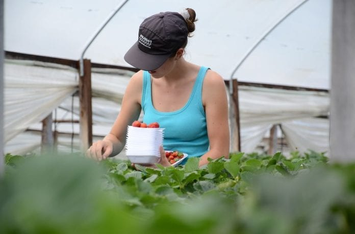 rolnictwo ekologiczne, gospodarstwa rolne, Liczba gospodarstw ekologicznych, produkcja ekologiczna, świadomość konsumentów, rynek ekożywności, dopłaty unijne, przemysł spożywczy