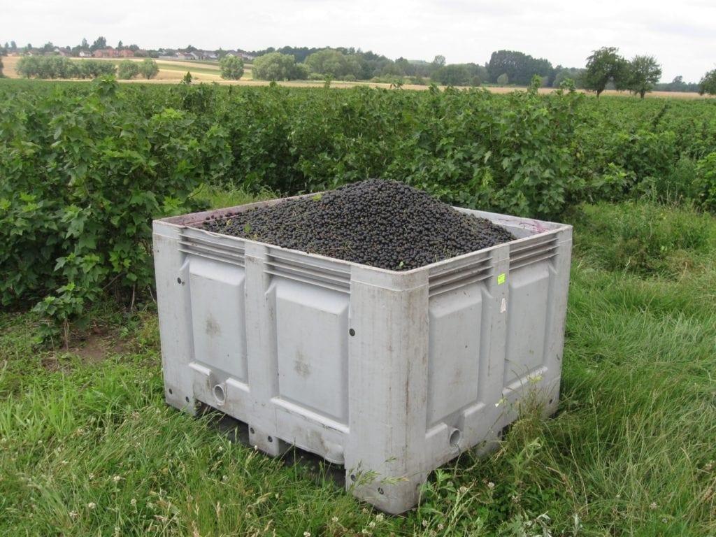 pozycja producentów rolnych, pozycja rolnika w łańcuchu żywnościowym, przewaga kontraktowa