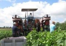 rolnik, rolnictwo, portal rolny, ceny owoców, UOKiK, ochrona konkurencji, przewaga kontraktowa, produkty rolne, ustawa, prawo, postępowania, Südzucker Polska,