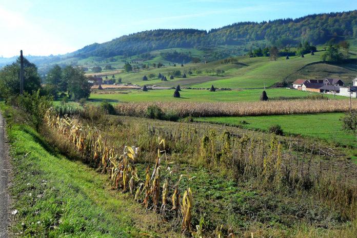 rolnik, rolnictwo, portal rolny, Rumunia, Rolnictwo w Rumunii, Euractiv.pl