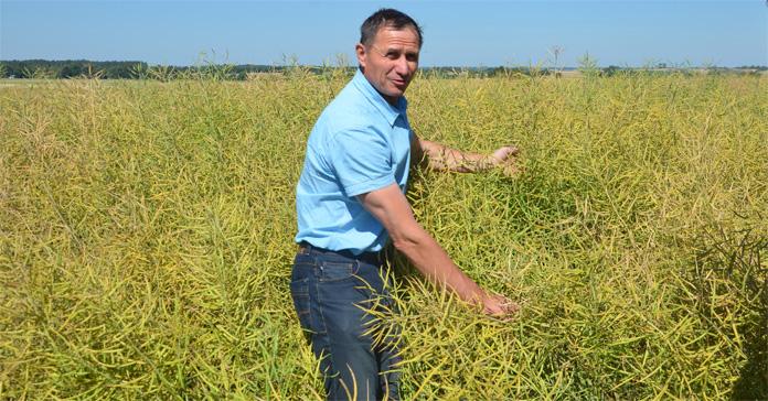 rolnik, odmiany rzepaku, Syngenta, SY Saveo, George, SY Florida, SY Iowa, odmiany rzepaku ozimego