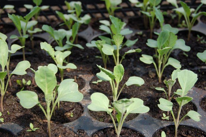 biostymulator, biostymulatory, mikroorganizmy, ochrona roślin, nawożenie, odżywianie roślin