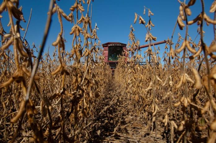 COBORU, soja, plonowanie soi