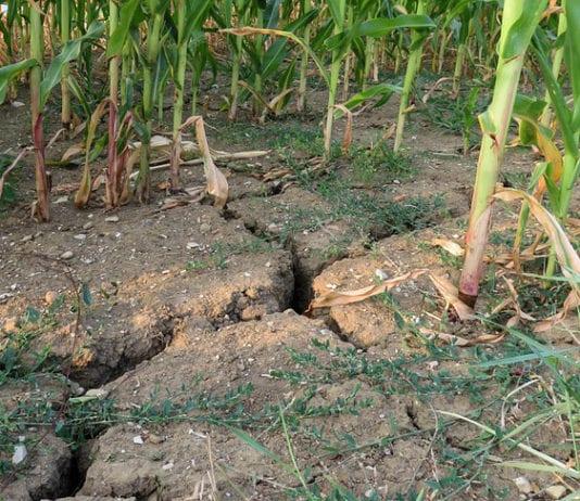 susza rolnicza