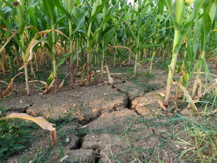 plan przeciwdziałania skutkom suszy, susza, Wody Polskie