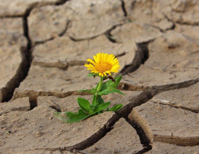 pustynnienie, ETO, Europejski Trybunał Obrachunkowy, gleba