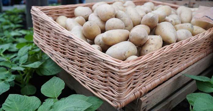 ziemniaki, ceny ziemniaków, Instytut Ekonomiki Rolnictwa i Gospodarki Żywnościowej, Wiesław Dzwonkowski