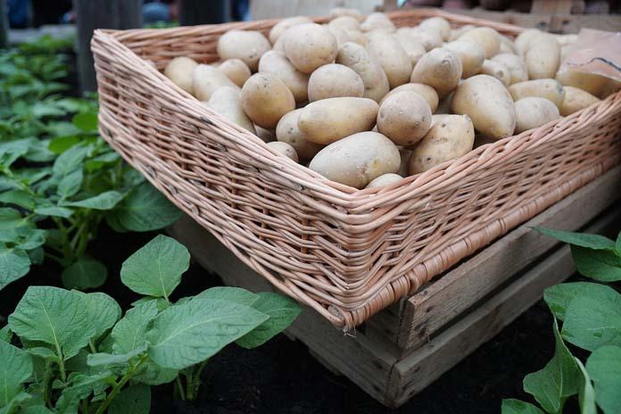 ziemniaki, znakowanie ziemniaków, pochodzenie ziemniaków, Centrum Prawa Żywnościowego, Agnieszka Szymecka-Wesołowska, flaga kraju pochodzenia